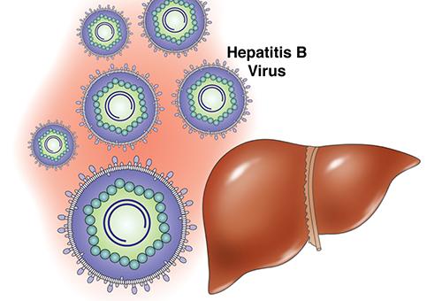 Печень и вирус гепатита B