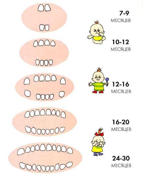 Порядок появления первых зубов