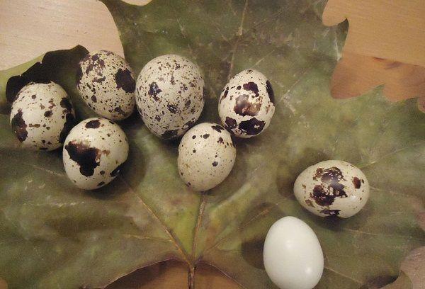 вареные яйца на листке