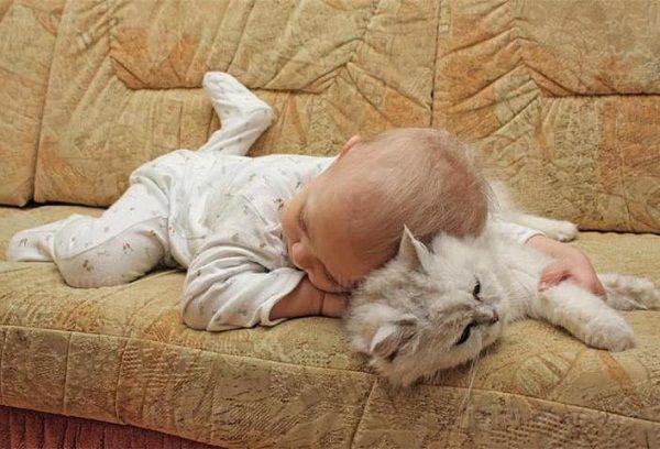 грудничок с котом