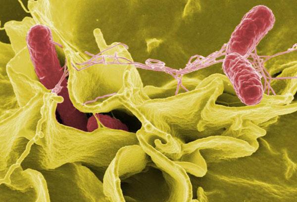 Действие адсорбента против патогенных бактерий