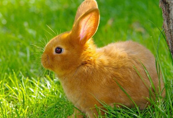 Домашние животные для детей – как выбрать идеального друга?