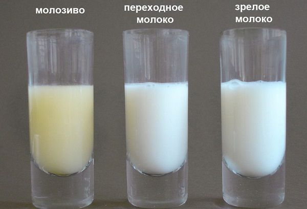 молоко грудное молозиво