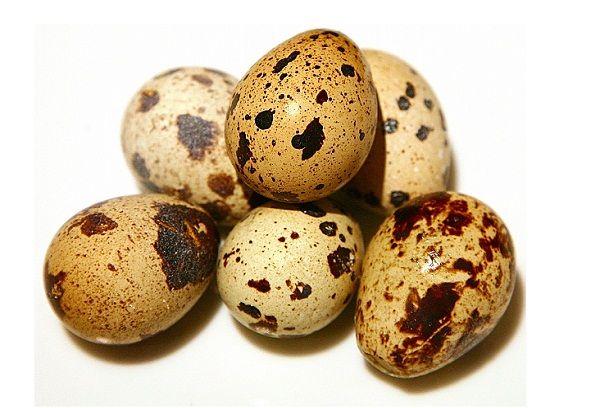 яйца птицы