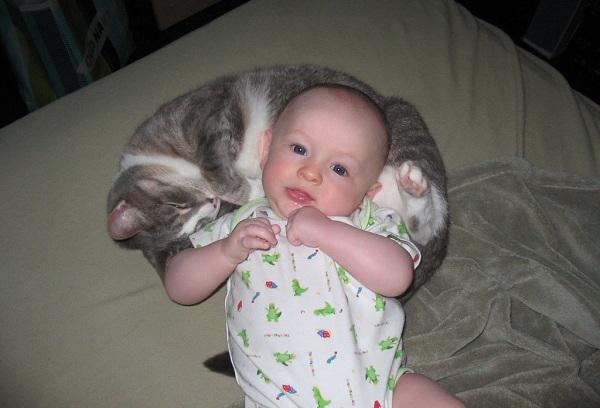 грудничок с кошкой