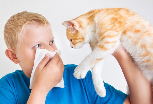 мальчик и рыжий кот