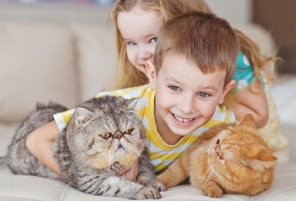 дети играют с кошками