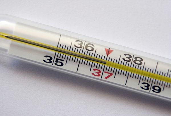 Температура тела 37 градусов