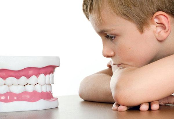 Мальчик смотрит на макет зубов